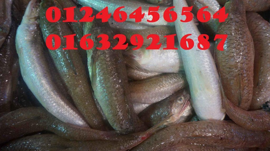 Chả cá Vũng tàu địa chỉ chuyên bỏ sỉ chả cá